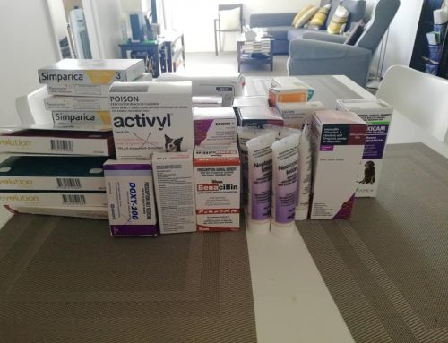 Special Thanks for Medical Supplies Donated by Vet Hospitals